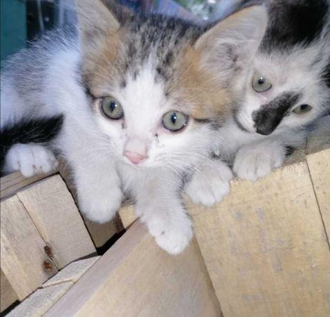 Котята - крысоловы в подарок!