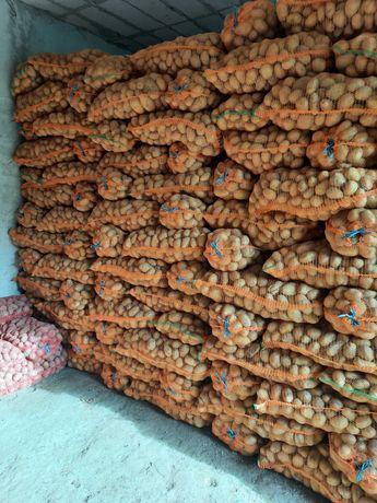 Vand cartof Carerra