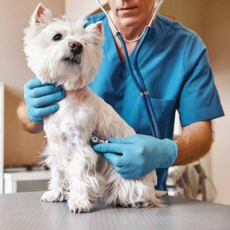 Ветеринарные услуги.Ветеринар.Онлайн консультация