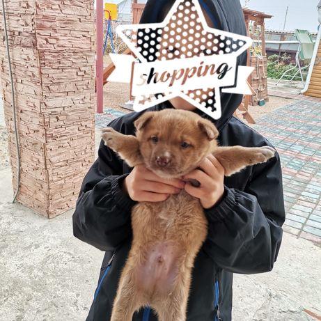 Отдам маленького щеночка в добрые руки