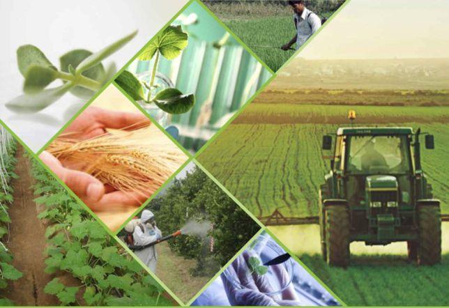 Пестициды! Гербициды,  протравители семян, фунгициды, инсектициды.