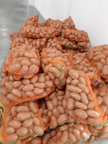 Cartofi rosii de consum