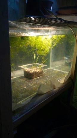 аквариум 50л с рыбками и оборудовоньем