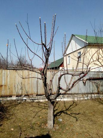 Обрезка, Спил плодовых деревьев!