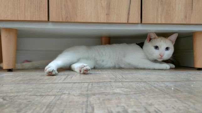 Motan/Pisic spre adopție