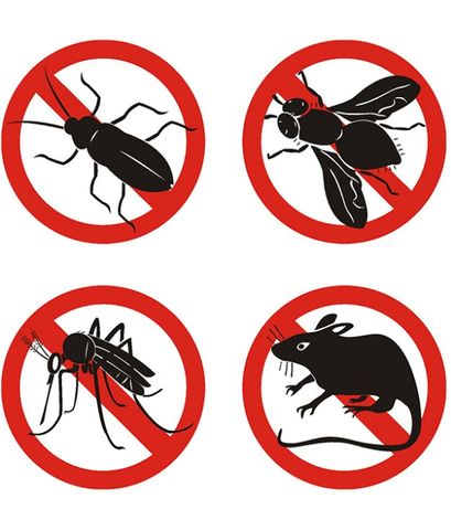 Deratizare, dezinsectie si dezinfectie