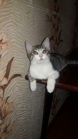Котенок в добрейшие ручки!
