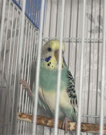 Милые попугаи