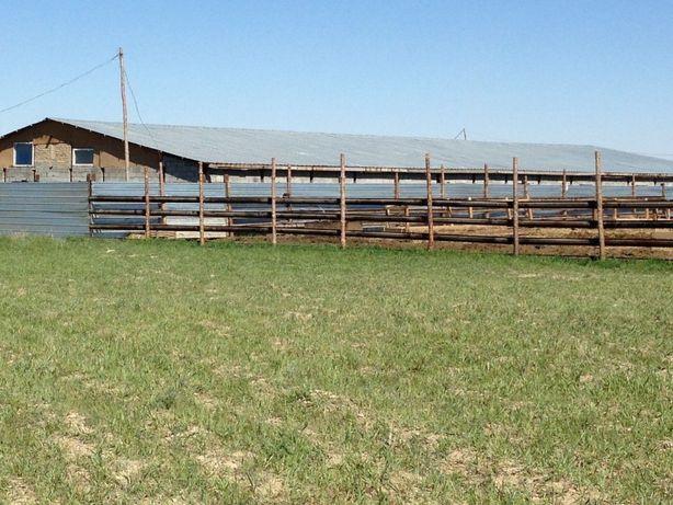 Животноводческая ферма , откорм база, фазенда , крестьянское хозяйство