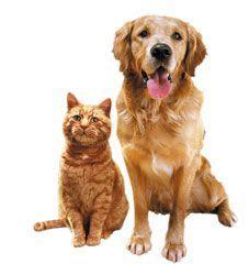 Hrana caini si pisici,pasari exotice,rozatoare mici.