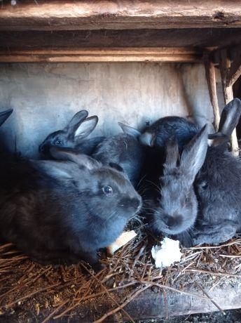 Продам молодых кроликов.