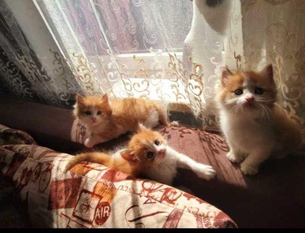 Отдам милых котят в хорошие руки))