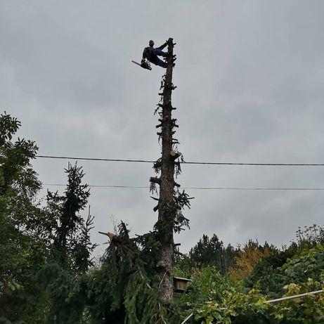 Рязане на опасни дървета, кастрене, събаряне, услуги от алпинисти