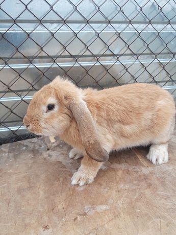 В продаже кролики разных парод