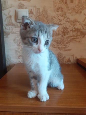 Отдам котенка (девочка)2 месяца