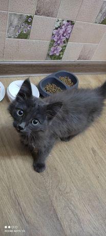 Котенок мальчик ищет дом срочно