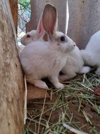 Продаю кролики (қоян сатамын)