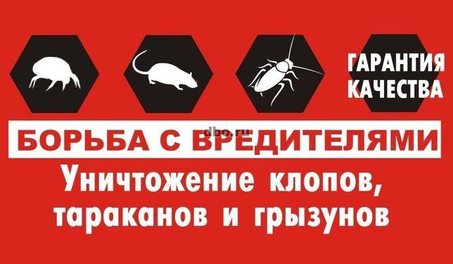 Дезинфекция мышей,комаров,блох,крыс,клопов,тараканов,клещей,муравьев!