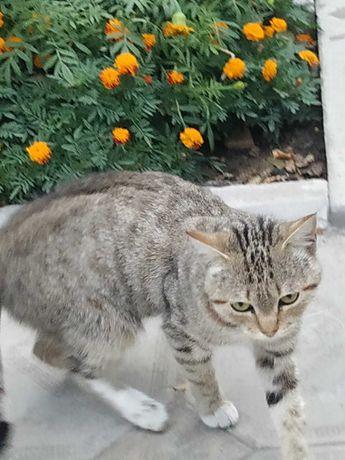 отдам степную молодую кошку в добрые руки