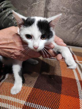 Умные кошечки ищут доброго хозяина!