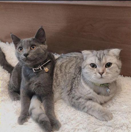 Кот ищет новую семью*