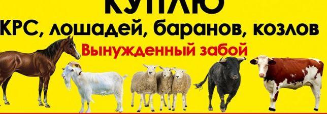 Коровы быки телки лошадей баранов коз
