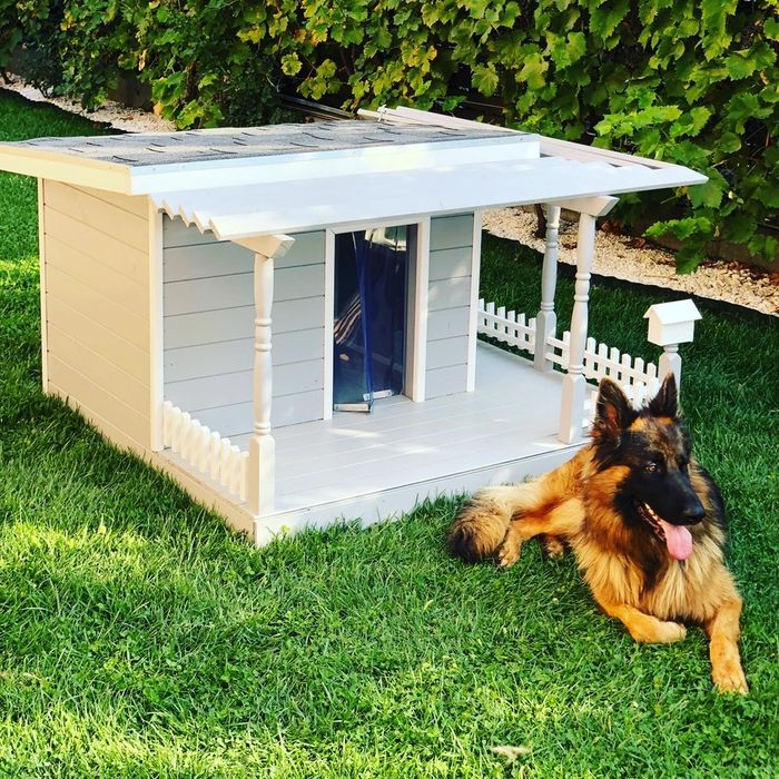 Cusca caine / casuta caine  Pet Mansion Design Bucuresti - imagine 1