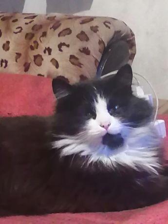 Ищу кошку, потерялась на Красном Кордоне