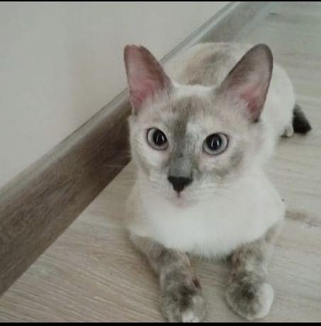 Красавица кошка Цирилла