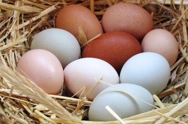 Oua proaspete găina si rata