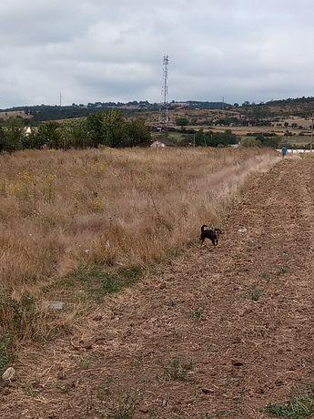 De vânzare pământ lângă șosea 2000