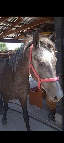 Лошадь(год рождения 2019)