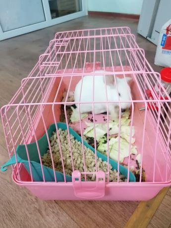 Кролик продается
