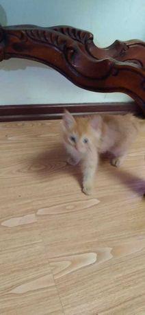 Маленький котенок 1,5 месяца