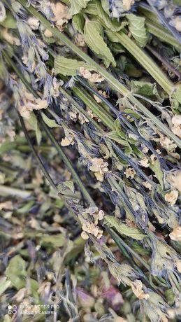 Шалфей, травы для чая, свечей