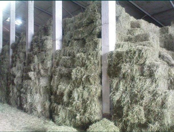 Шшш сено тюках в сено в тюках чистая с доставкой