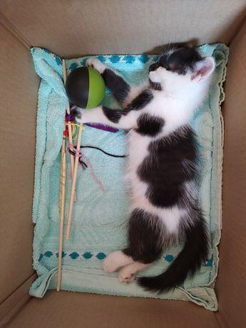 Срочно отдам котёнка в добрые руки!
