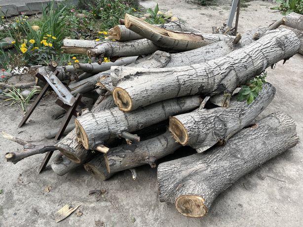 Дерево орех (распиленное)