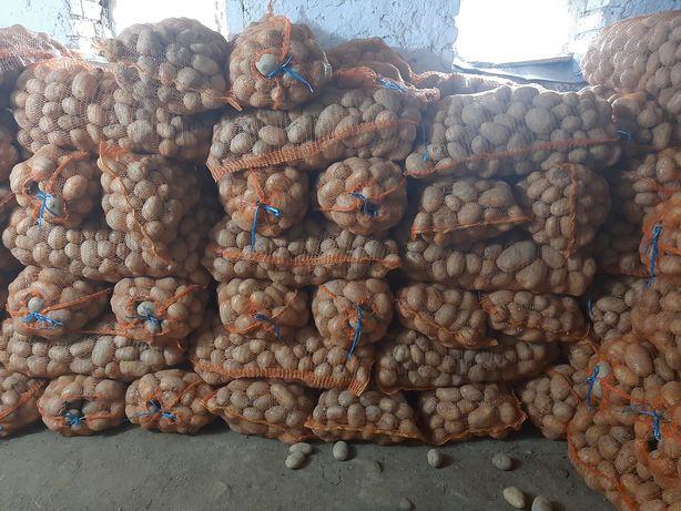 Cartofi albi de consum