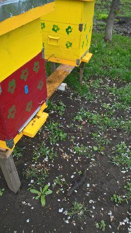 Roiuri albine sanatoase
