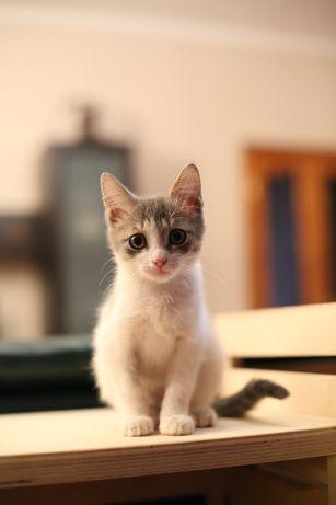 Отдам котенка в добрые руки девочка