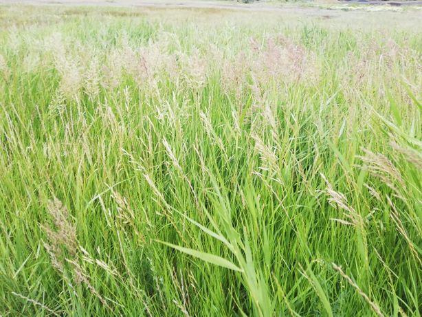 Разрешу бесплатно косить траву на корм животным.