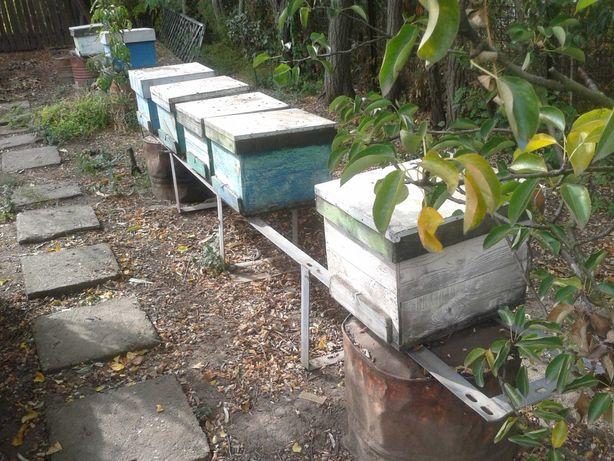 vind rame 1/1cladite ,suporti cutii albine