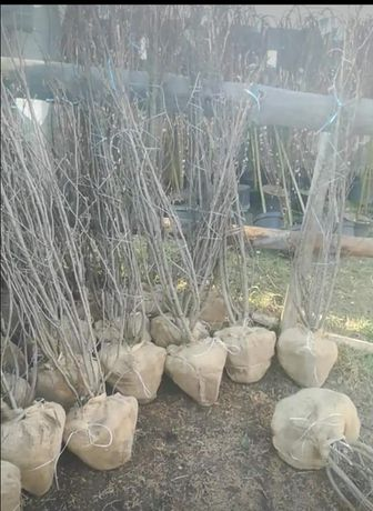 Specialitati plante ornamentale