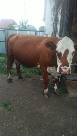 Продам корову...