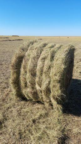 Продам сена в рулонах