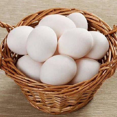 Продам яйца домашние