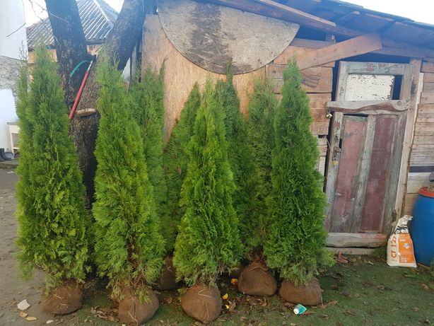 Plante ornamentale pentru gradina