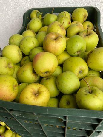 Vând mere pentru consum
