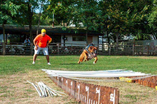 Dresaj și pensiune canina